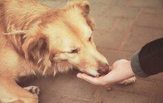 Ketina teikti įstatymo pataisas dėl žiauraus elgesio su gyvūnais