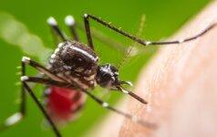 Taikosi išnaikinti daugiausiai žmonių pražudančius vabzdžius: mieste išleis 20 mln. kitokių uodų
