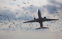 """""""Delta Airlines"""" išlaipinus keleivį kilo tarptautinis skandalas"""