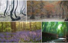 Top 5 gražiausi pasaulio miškai