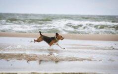 Paplūdimiai, į kuriuos galite eiti kartu su augintiniais: Klaipėdoje nelegalios nudistės deginsis su šunimis
