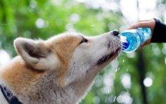 Kas alina gyvūnų imuninę sistemą ir kaip ją sustiprinti?