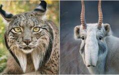 Kaip menkai vertinama jų gyvybė: gyvūnai, kurių greit galime netekti