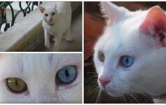 Traukia dėmesį: sunku atsigėrėti katės akimis