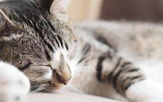 Kodėl katės beveik visą laiką miega