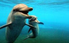 Delfinai – dideliame pavojuje: paaiškėjo didesni nei manyta jų medžioklės mastai
