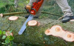 Darbams naudojama mediena: eglė