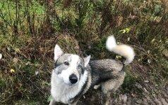 Pasieniečiai rado prieš keturias dienas pasiklydusį medžiotojo šunį