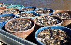 Invazinė žuvis verčia nerimauti: pasekmės jaučiamos jau dabar