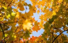 Astrologės Lolitos prognozė rugsėjo 30 d.: nepradėkite svarbių darbų