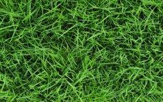 Vasaros pėdsakai ant drabužių – kaip išvalyti žolės dėmes
