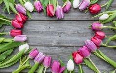 Valentino dieną už važiavimą Rygos mikroautobusu - išskirtinis mokestis