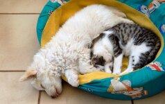 Šuo ir katinas