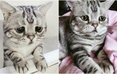 Katės liūdesys sulaukė žaibiško populiarumo: internautai stebisi jos išvaizda