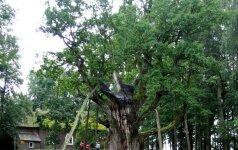 Miškų ateitis kuriama mėgintuvėliuose