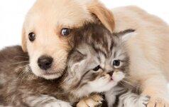 Šuo ar katė? Atsakymas išduos Jūsų charakterį