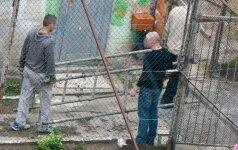 Kalėjimo bėglių istorijos: užsimuša arba susilaužo koją ir grįžta į kamerą