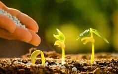 Pagrindiniai pavasario darbai augalų augintojams