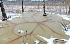 Kerinti gamta: įspūdingi žiemos raštai