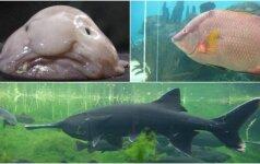 Keisčiausios pasaulio žuvys: vienos ypatingai gražios, kitos – baisios