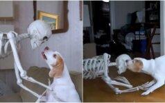 Helovyno linksmybės: kaip išgąsdinti savo šunį?