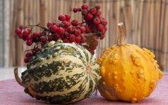 Floristė pataria, kaip papuošti namus rudenį