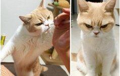 Katė, kuri neatrodo labai laiminga