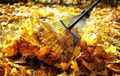 Rudeniniai lapai: kaip jais pagerinti dirvožemio kokybę?