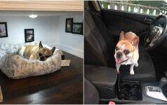 Vyro išradingumas stebina: internautai pametė galvas dėl kambario šuniui