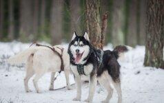 Sportas su šunimis: sunku atplėšti akis nuo dūkstančių keturkojų