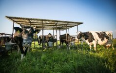 Žemdirbiai: Lietuvos ūkininkai – net labiau pažengę nei Vakarų Europoje