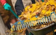 Aplinkos tvarkymas šį rudenį: svarbiausios užduotys