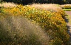 Natūralistinio stiliaus želdynuose vyrauja paprasti, natūralią gamtą primenantys augalai.
