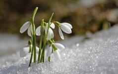 Astrologės Lolitos prognozė vasario 17 d.: darbinga diena