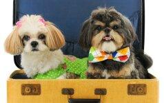 Šunis klonuojanti P. Korėjos bendrovė: jų nori augintinių netekę turtuoliai