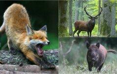 Pavojus gamtoje: užpulti gali net tie, iš kurių to tikrai nesitikime