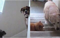 Pamatykite, kaip sugyvena seniausi priešai - šunys ir katės: ir prajuokins, ir nustebins