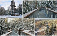 Medžių lajų takas dovanoja fantastiškus vaizdus: žiema suspindo visu gražumu