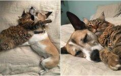 Nuostabi gyvūnų draugystė: sergančią kalytę nuo nerimo išvadavo katė