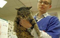 Prievolė gyvūnų šeimininkams: kaip vyksta ši procedūra?