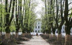 Kuo toliau į miestą, tuo mažiau medžių: kada tai blogas sprendimas?