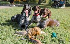 Fotografės Miglės širdį užbūrė medžiokliniai šunys