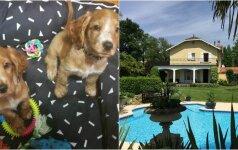 Naujas keliavimo būdas: būstas mainais už gyvūno priežiūrą