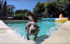 Gudruolis katinas sugalvojo, kaip paplaukioti ir nesušlapti