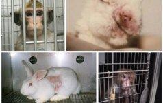 Europiečiai reikalauja, kad laboratorijose neliktų gyvūnų