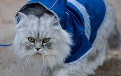 """Neįtikėtino grožio """"kačių karalius"""" sužavėjo tūkstančius"""