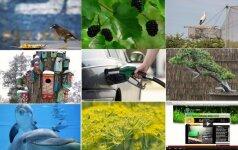 10 ieškomiausių iš GRYNAS.lt: Černobylis, roborovskiai ir pankolio arbata