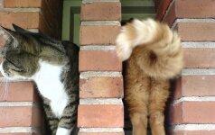 15 kačių nuotraukų, padarytų labai tinkamu metu