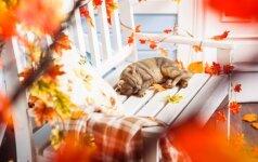 GALERIJA: nebrangios idėjos, kaip namuose sukurti rudeniškai jaukią nuotaiką