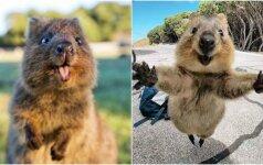 Laimingiausias gyvūnas pasaulyje: kiekvienas nori įamžinti jo šypseną